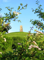 The Tower on the Tor through Hawthorne blossoms - Early Summer